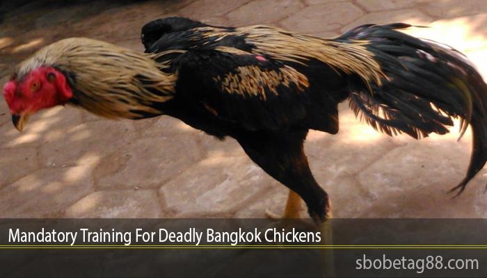 Mandatory Training For Deadly Bangkok Chickens